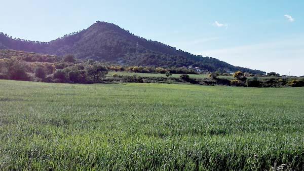 aleix colonia güell blat