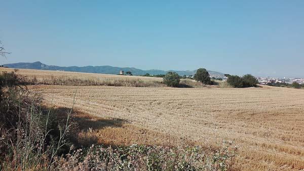 Colònia Güell camps de blat
