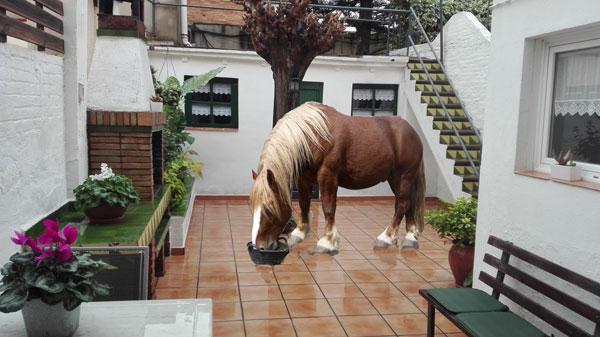 el conte del cavall
